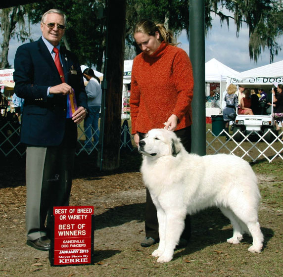 Amber winning Best of Breed over Specials at 11 months